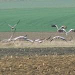 Megérkeztek a harkányi gólyák