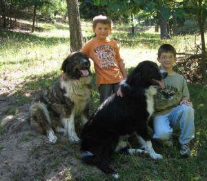 Új rendelet: több kutya egy helyen