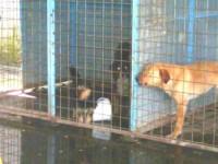 kutyák a gépállomáson