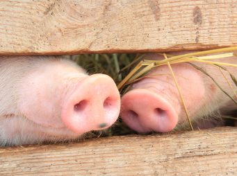 Hetvenmilliárdért építhetünk állattartó telepeket