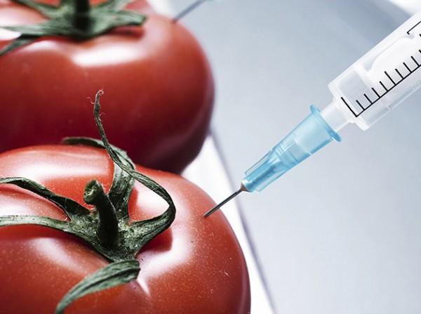 Kulcsfontosságú az együttműködés a GMO-k szabályozásában