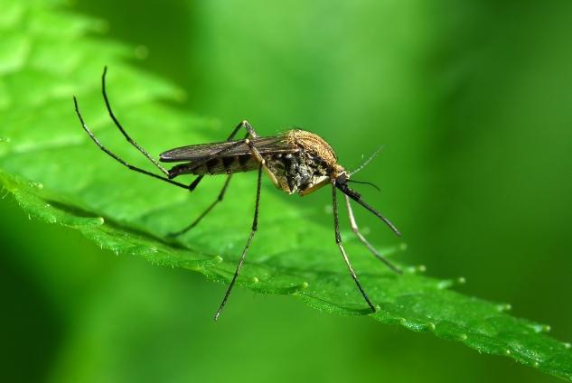 1,5 milliárd szúnyogirtásra