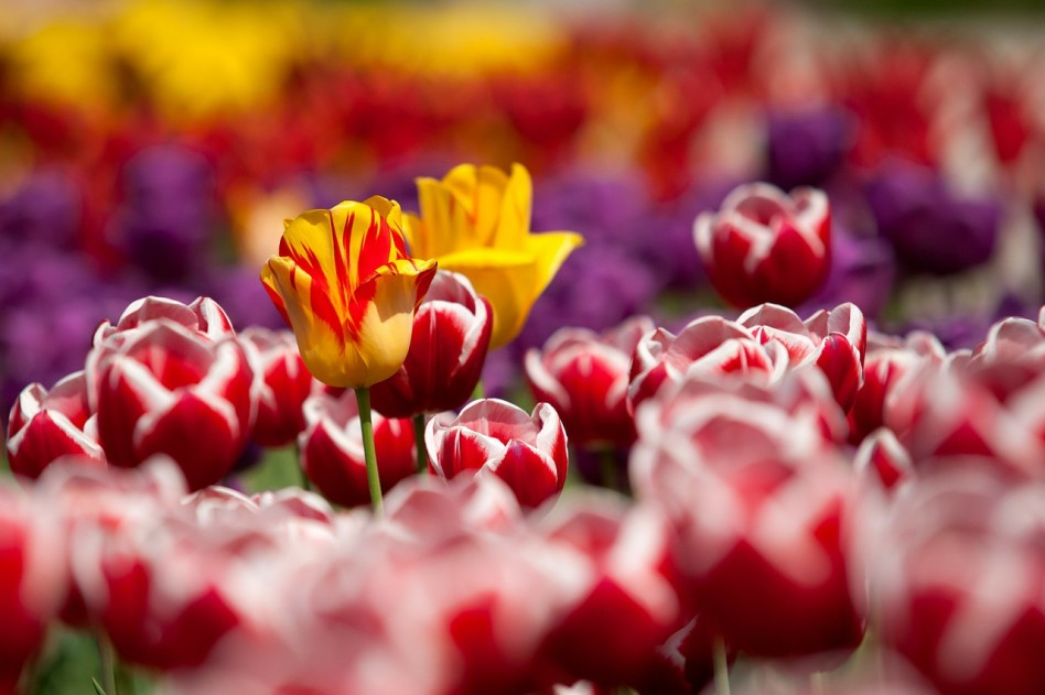 Harkány ismét a Virágos Magyarországért versenyen