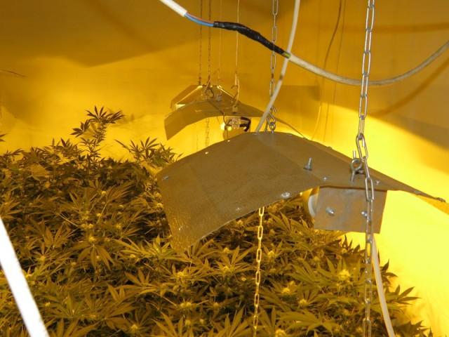 Panelházban termesztett marihuánát – azt mondja, magának