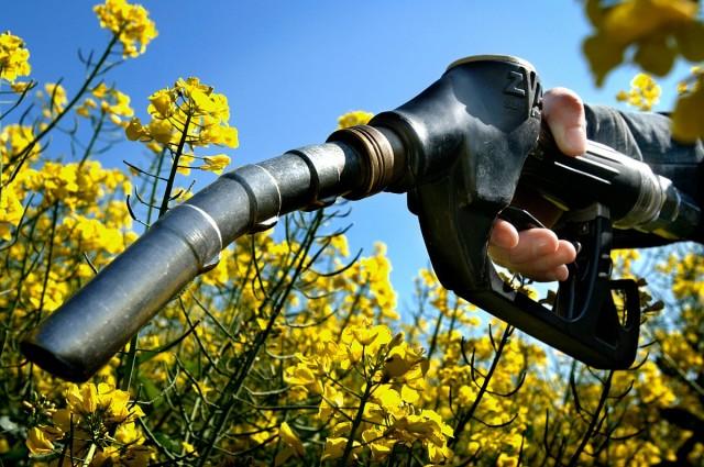 Visszafogják a bioüzemanyagok gyártását