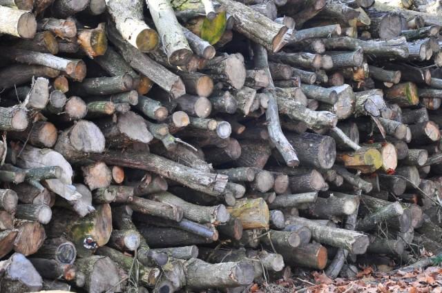 Több, mint száz köbméter fát már kiosztottak
