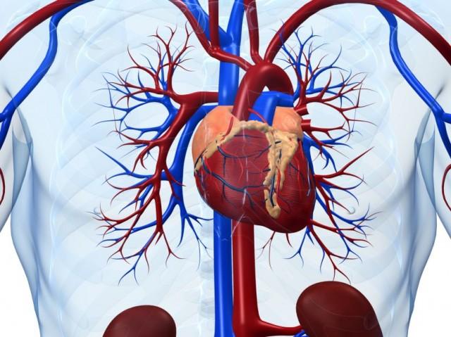 Szív-és érrendszeri betegségek