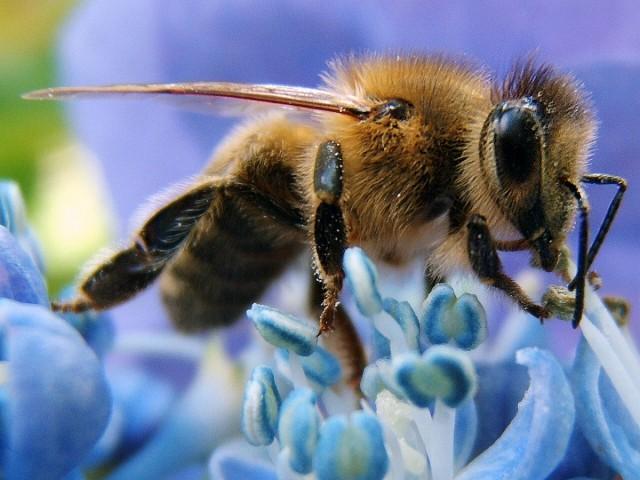Vigyázzunk a méhekre!