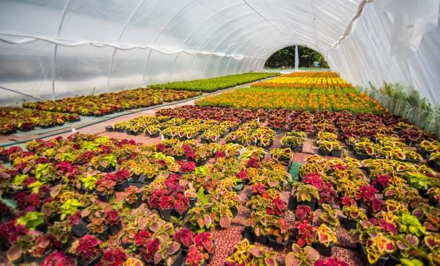 Harminc százalékkal több virág kerül az utcákra