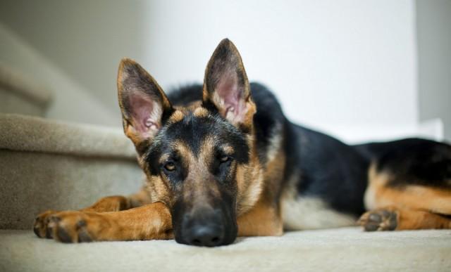 Jobban bízunk a kutyákban, mint a riasztóban