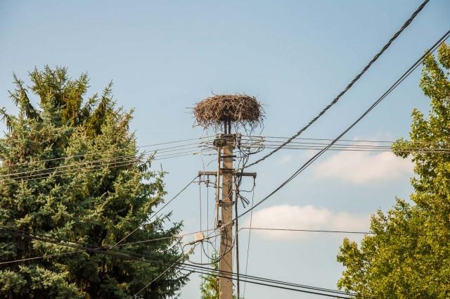 Már sosem derül ki, mitől haltak meg a terehegyi gólyák