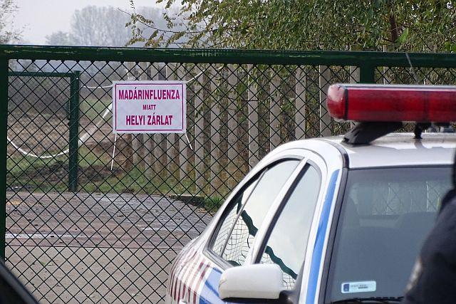 Újabb madárinfluenzás megbetegedés Magyarországon