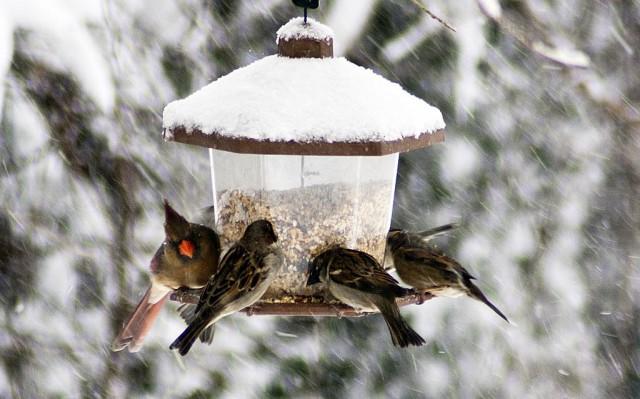 Így etesd a madarakat