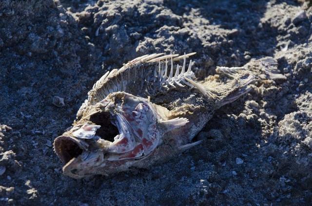 Ismeretlen holttestet találtak a Balatonban