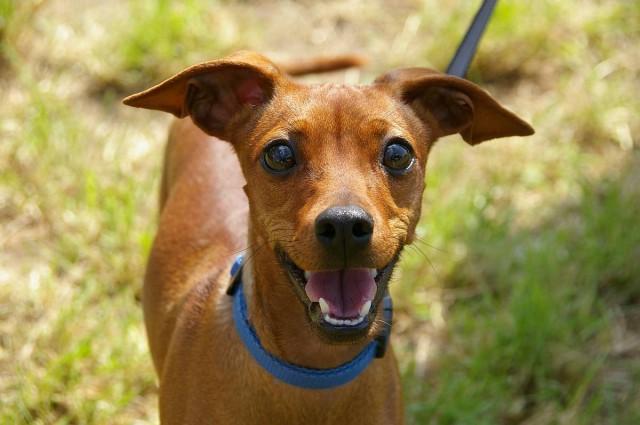 Visszavonták a kutyaadót bevezető törvénymódosítási javaslatot