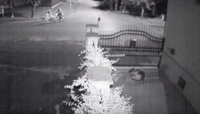 Letarolta a kerítést és megölte a kutyát a részeg sofőr