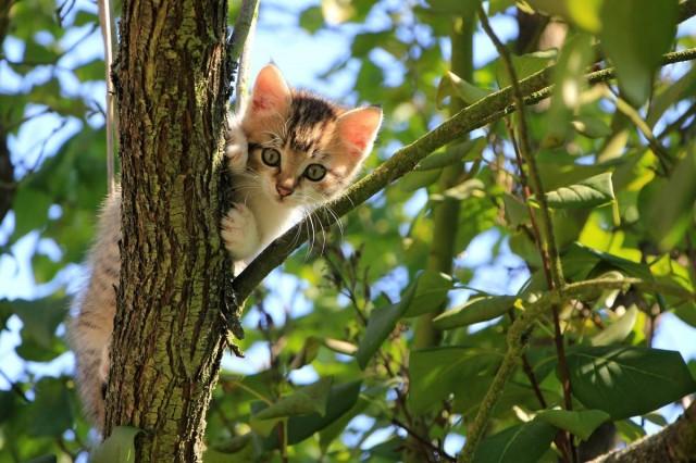 A katasztrófavédelem megmondja a tutit, mit tegyen, ha macskát lát a fán