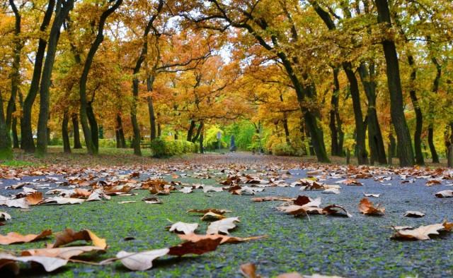 Öt tipp a biztonságos őszi közlekedéshez