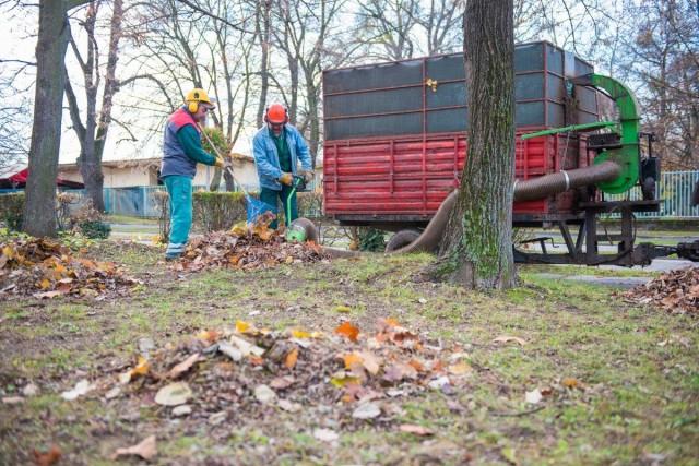 Folyamatos munkát és rengeteg tüzelőt ad az őszi lombhullás