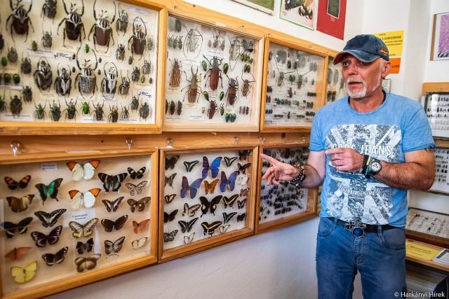 A rovarok varázslatos világába pillanthatunk be Drávaszabolcson