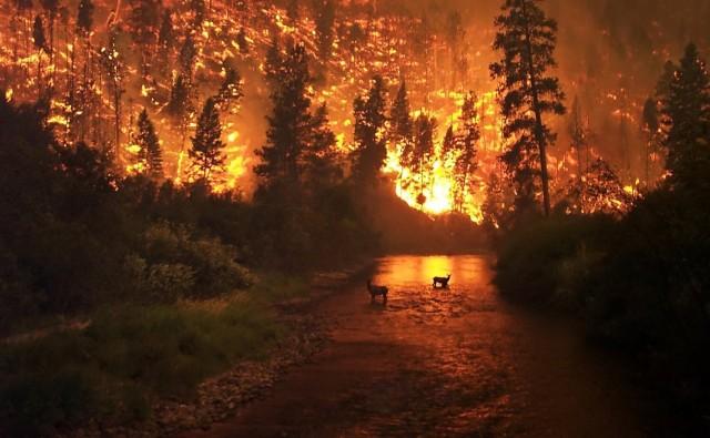 Megállíthatatlan tűz tombol Amerikában