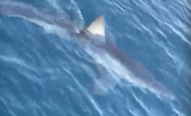 Cápát láttak a horvát partoknál – VIDEO