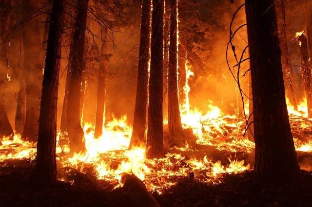 Természetvédelmi terület is megsérült a szerb tűzvészben