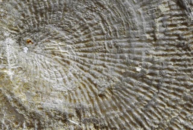Új ősmaradványfajokat találtak a Mecsekben