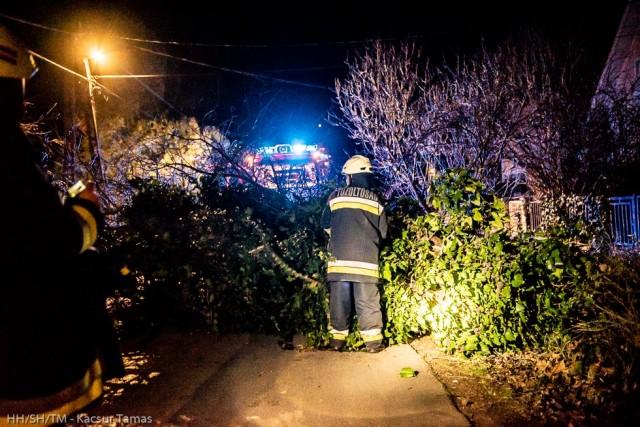 Harkányban is fákat döntött ki a vihar