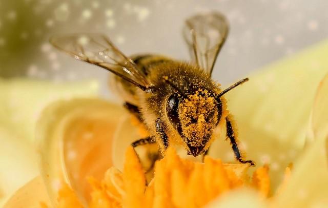 Adókedvezményt kapnak a méhészek