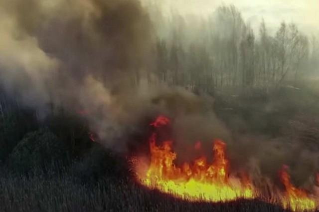 Szórakozásból gyújtották fel a csernobili erdőt