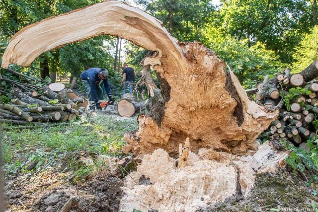 Kidőlt fa a Harkányi Gyógyfürdő területén. Fotó: Kacsúr Tamás, Új Harkányi Hírek